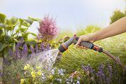 Правильный полив сада: что это такое и как осуществить